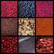 Оптовые поставки свежезамороженных ягод и белого гриба